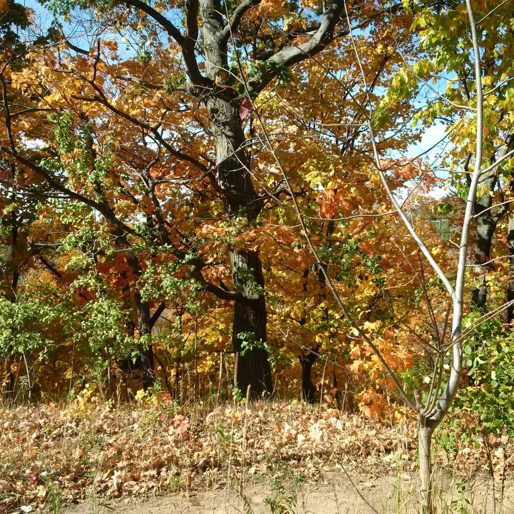 even more fall foliage