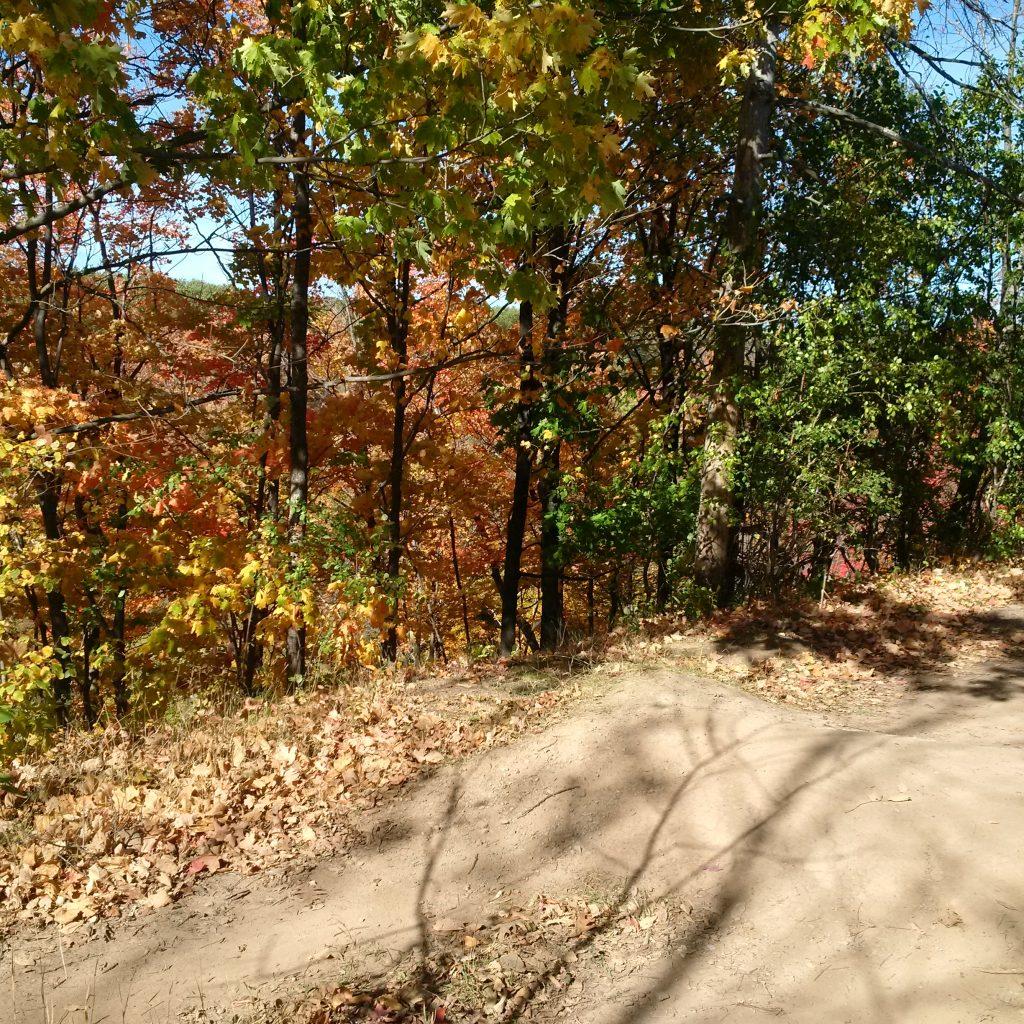 some fall foliage